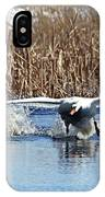 Mute Swan Chasing Canada Goose IPhone Case