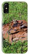 Newborn Red Deer IPhone Case