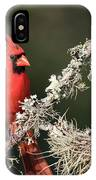 Northern Cardinal In Repose IPhone Case