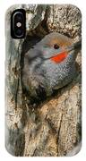Northern Flicker Pokes His Head Out IPhone Case