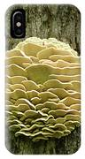 Northern Tooth Fungus IPhone Case