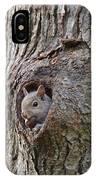 Nutty Squirrel Surprise  IPhone Case
