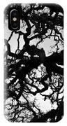 Oak Tree In Winter Detail - Amador County, California IPhone Case