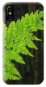 Office Art Ferns Art Redwood Tree Forest Fern Giclee Prints Baslee Troutman IPhone Case