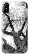 Old Cottonwood Tree IPhone Case