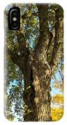 Old Elm Trunk In The Park IPhone Case