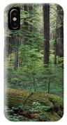 Old Growth Forest IPhone Case