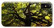 Old Old Angel Oak In Charleston IPhone Case