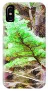 Old Pine Tree 1 IPhone Case