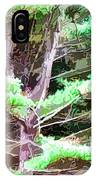 Old Pine Tree IPhone Case