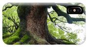 Old Tree In Kyoto IPhone Case