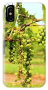 Old York Winery Grapes IPhone Case