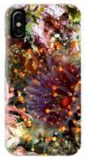 Orange Ball Corallimorph Anemone IPhone Case