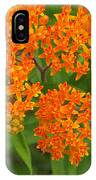 Orange Butterfly Weed From Above IPhone Case