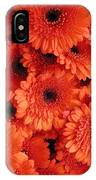Orange Daisies IPhone Case