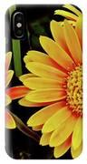 Orange Gerbera Daisies IPhone Case
