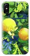 Oranges On Vine IIi IPhone Case