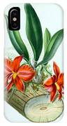 Orchid, Sophronitis Grandiflora, 1880 IPhone Case