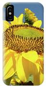 Oregon Gardens Silverton Sunflower Honeybee Baslee  IPhone Case