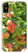 Ornamental Apples On A Tree IPhone Case