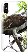 Osprey With Snack IPhone Case