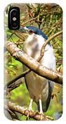 P2024983 Black Crowned Night Heron IPhone Case