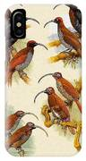 pa FB WilliamTCooper LesserBirdsOfParadise Penny Olsen IPhone Case