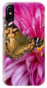 Painted Lady On Dahlia IPhone Case