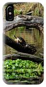 Painted Turtles IPhone Case