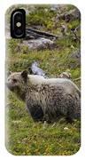 Panda In Many Glacier IPhone Case