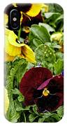 Pansies Of A Different Color IPhone Case