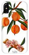 Peach And Peach Blossoms IPhone Case