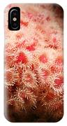 Peachy Urchins IPhone Case