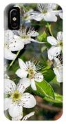 Pear Tree Blossoms Iv IPhone Case