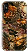 Peek A Boo IPhone Case