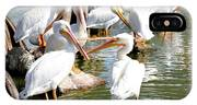 Pelican Squabble IPhone Case