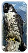 Peregrine Falcon, Yosemite Valley, Western Sierra Nevada Mountain, Echo Ridge IPhone Case