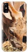 Persian Fallow Deer IPhone Case