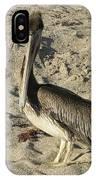 Peruvian Pelican Standing On A Sandy Beach IPhone Case