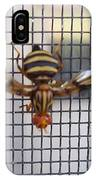 Picture Winged Bee Fly On Screen     Spring      Indiana IPhone Case