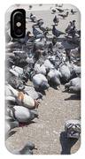 Pigeons Are Eating Forage  IPhone Case