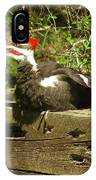 Pileated Woodpecker1 IPhone Case