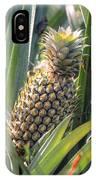 pineapple plantation in Kerala - India IPhone Case