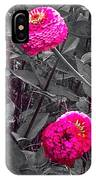 Pink Zinnias Against Grey Background IPhone Case