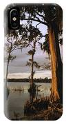 Plantation Gardens, Cypress Trees IPhone Case