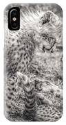 Playtime In Africa- Cheetah Cubs Acinonyx Jubatus IPhone Case