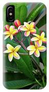 Plumeria Flowers 5 IPhone Case