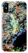 Pohnpei Flatworm IPhone Case
