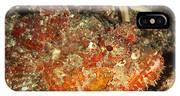 Poisonous Stone Fish, Scorpaena Mystes IPhone Case