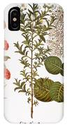 Pomegranate, 1613 IPhone Case
